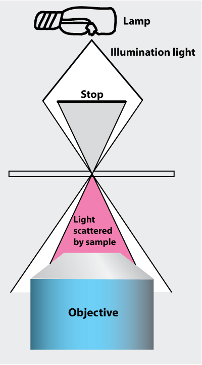 Bmc experimental procedures advanced lab principle of dark field illumination all the illuminating light is rejected and light scattered by the sample is collected by the objective ccuart Images